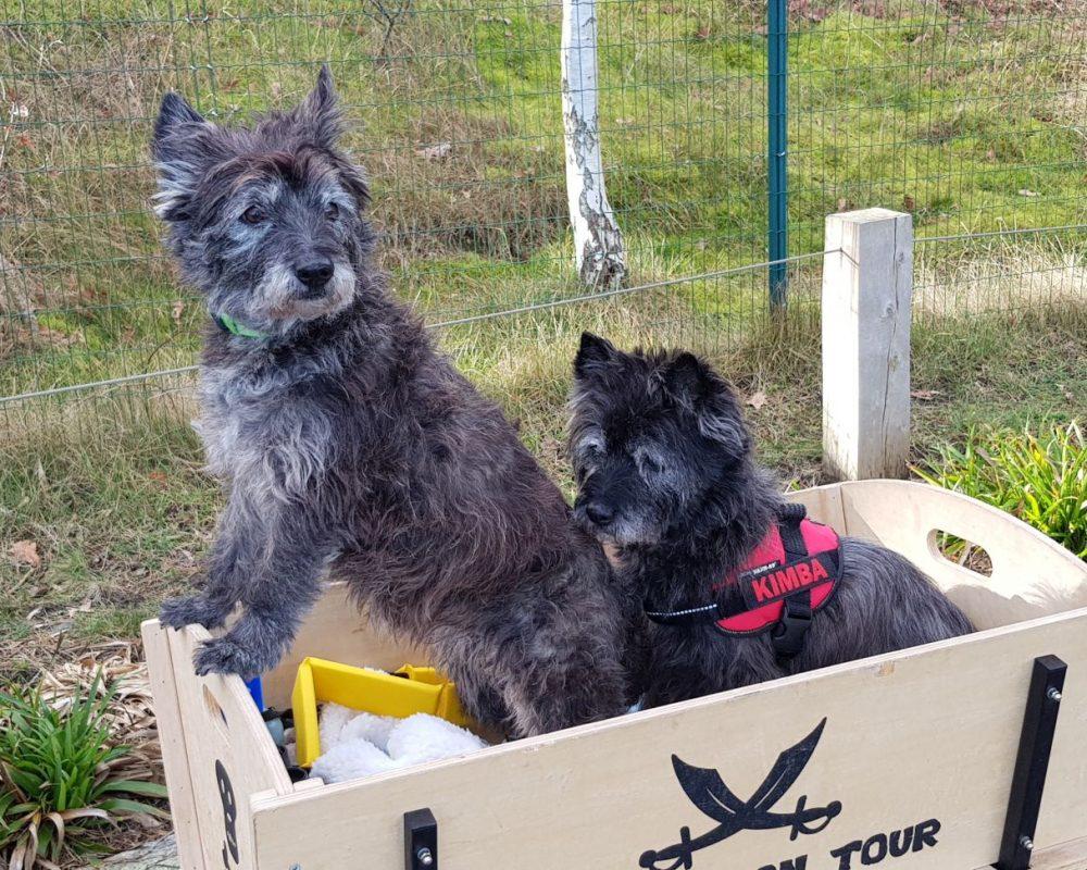 Kimba & Jette im Bollerwagen
